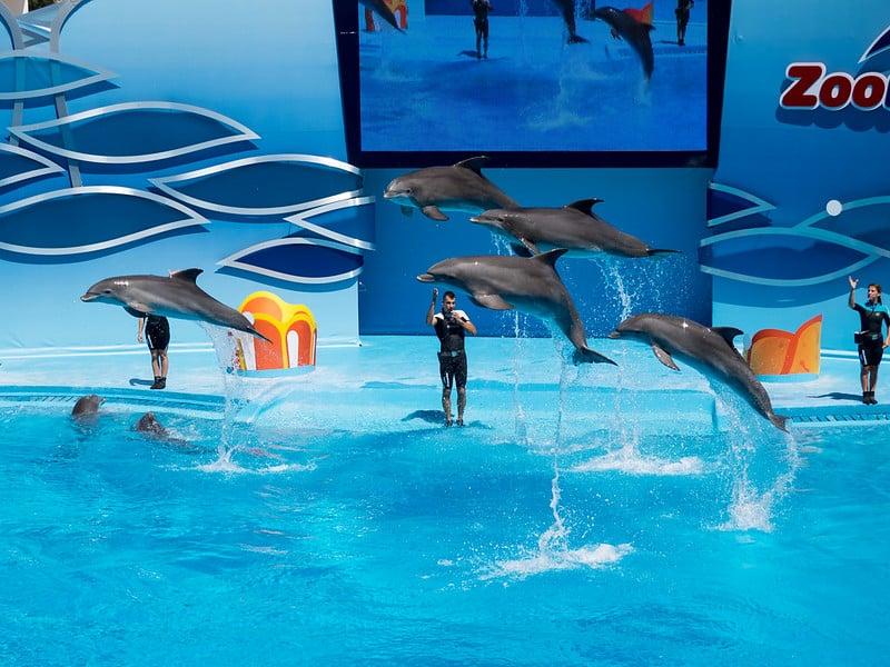 delfinshow är inte djurvänlig turism
