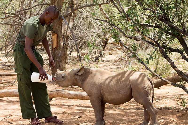 elephant sanctuary är djurvänlig turism